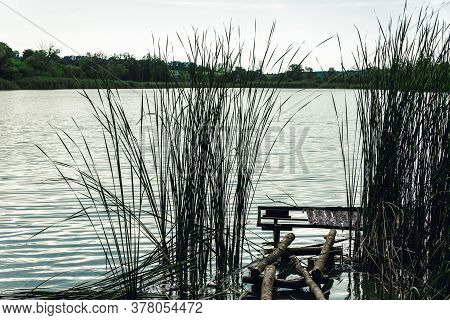 Lake Shore. Reed. Thickets Of Trees. Fishing Pier.