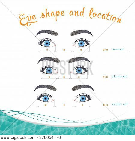 Eye Locations In Width, Normal, Close-set, Wide-set Against A White Background