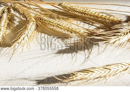 Agrarian Still Life Of Wheat Ears On The Table.