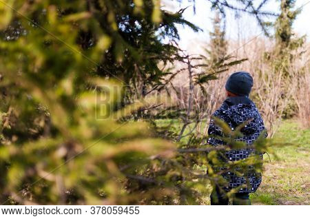 Boy Hid Behind A Tree In The Forest.