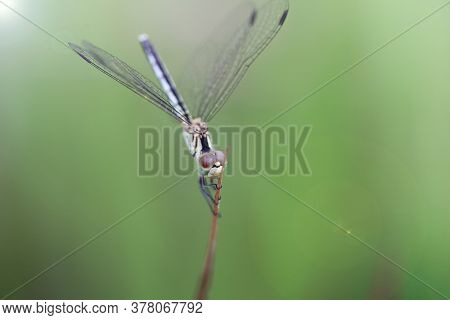 Blue Dragonfly Hanging On A Leaf In A Windy Day