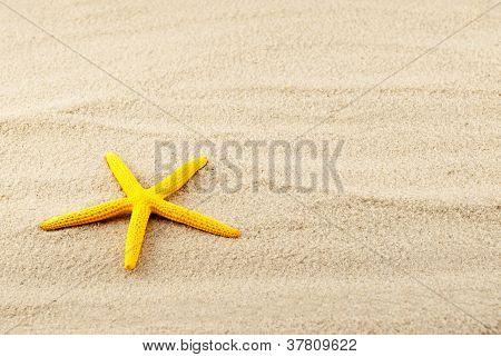 Yellow Seastar.