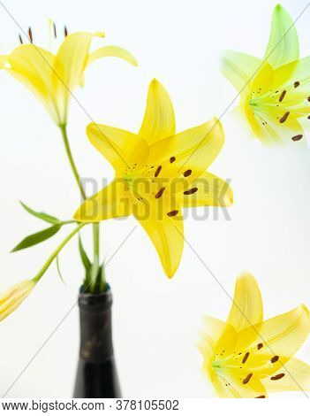 A Yellow Asiatic Lily Lillium Flower With Green Stem And Leaves On A White Background.