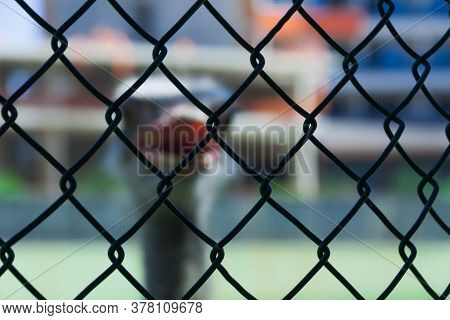 Ostrich In Captivity Outside The Fence Of Metal Wire