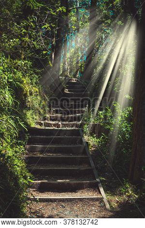 Sunlight Flowing Over Stairway In The Forest