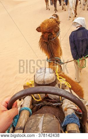 View From The Side Of The Rider On A Two-humped Camel And A Guide, Sahara Desert, Tunisia. Ahead The