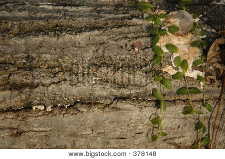 Log And Vines