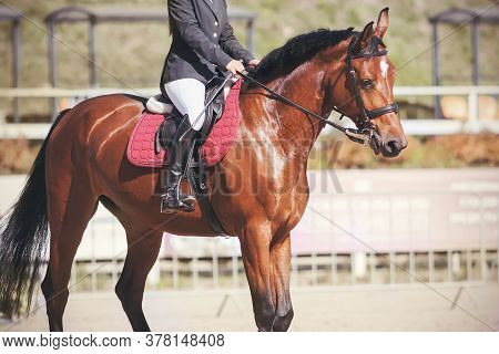 On A Beautiful Bay Sports Horse In The Saddle Sits A Rider. Equestrian Competitions On A Sunny Day.