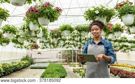 Modern Smart Flower Greenhouse. Smiling African American Woman Looking At Digital Tablet In Daylight