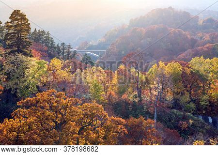 Sunset red leaf autumn fall season for Forest wodland in Akita Tohoku Japan
