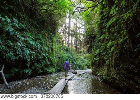 fern canyon in Redwoods National Park, USA, California