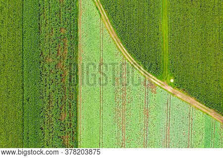 Aerial Top View At Path Between Fields Of Maize And Cabbage Plant. Rural Landscape In Austria.
