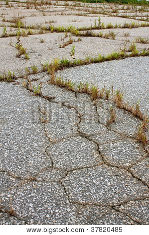 Cracks And Weeds Fill Asphalt Of Abandoned Lot