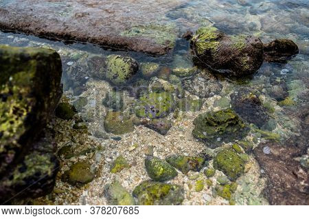 Sea Coral Bottom After Low Tide. Seabed Texture. High Quality Photo