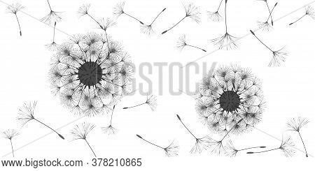 Dandelion Background For Your Design. The Wind Blows Dandelion Seeds. Floral Background. Advertising