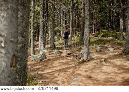 A Man Is A Tourist In A Pine Forest With A Backpack. A Hiking Trip Through The Forest. Pine Reserve