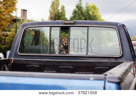 doggie in truck window parked in urban neighborhood poster