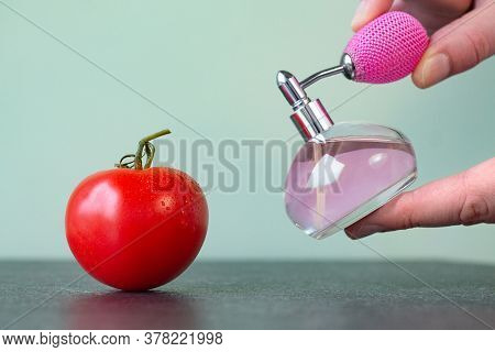 Red Tomato On Table That Is Sprayed With Pesticides. Symbol Of Artificial Ripening Of Vegetables. Un