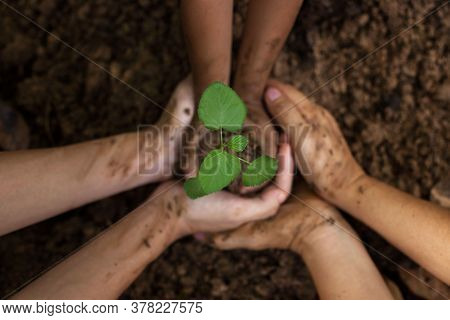 A Child Is Holding A Small Tree. The Hands Of Diverse People Planting Tree Together. Soil Planting A