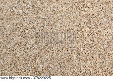 The Image Of Rice Husk Background. It Is A Hard Husk Of Rice Grains Obtained From Milling Rice. Is T