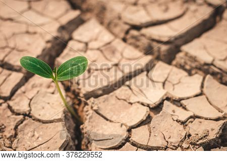 Growth Of Trees In Drought Crisis, Living With Tree Drought.