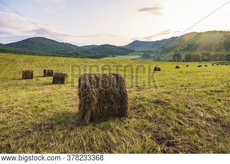Round Bales Of Straw On A Stubble Field. Harvesting In Autumn. Round Bales Of Hay Against The Mounta