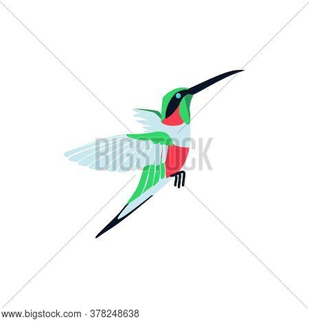 Flying Bright Tropical Hummingbird. Beautiful Bird With Colored Feathers And Wings. Tropical Nature