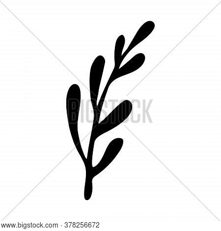 Vector Doodle Illustration Of Potherbs. Hand Drawn Healthy Farm Vegetable Isolated On White Backgrou