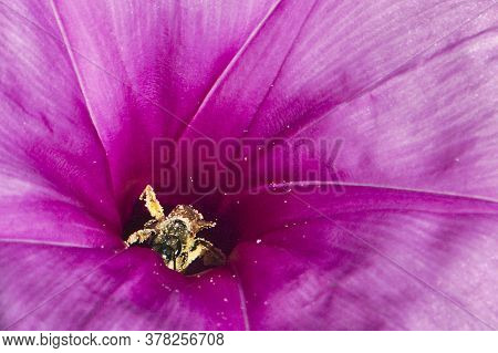 Bee Pollinating Violet Flower For Nature Backgrounds