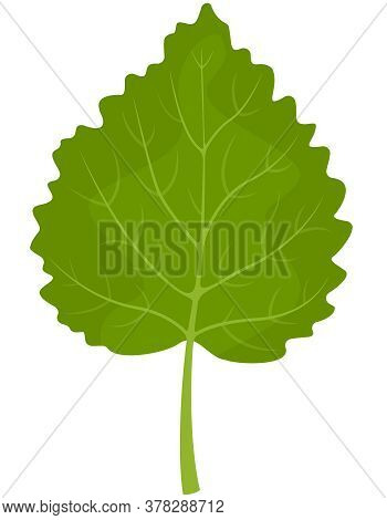 Birch Leaf Isolated On White Background. Part Of Tree In Cartoon Style.
