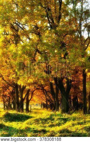 Autumn landscape. Oak autumn alley in autumn park, soft focus processing. Autumn forest, colorful autumn oak trees in sunset light. Autumn scene, autumn nature