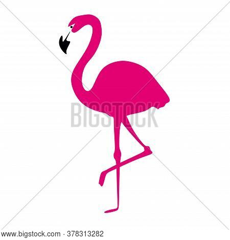 Pink Flamingo Bird.a Flamingo Stands On One Leg On A White Background.exotic Beautiful African Bird