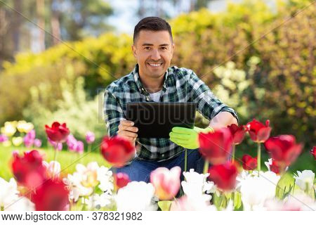 gardening and people concept - happy smiling middle-aged man with tablet pc computer and flowers at summer garden