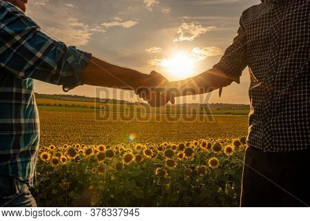 Close Up, Two Farmer Shaking Hands In The Sunflower Field, Concept Of Agricultural Cooperation