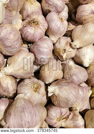 Pile Of Fresh Raw Garlic In Harvest Season
