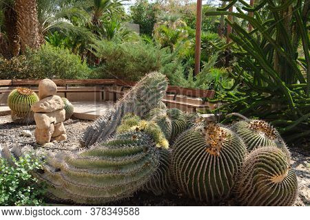 At The Heart Of Kibbutz Ein Gedi Is A Magnificent Botanical Garden That Was Planted In 1953 And Is H