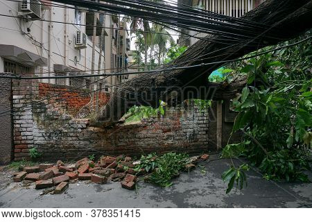 Howrah, West Bengal, India - 21st May 2020 : Super Cyclone Amphan Uprooted Tree Which Fell And Broke