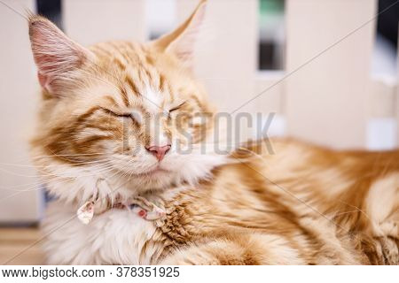 Cute Tabby Cat With Yellow Eyes And Long Whiskers. Close-up Portrait Of A Beautiful Cat. Relaxed Dom