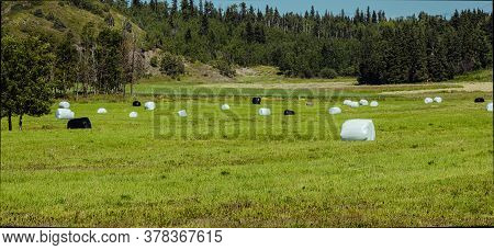 This Is A Farmers Field During Havest Times.the Field Is Full Of Round Bales With Protective  Placti
