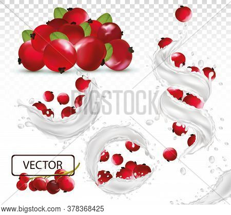 3d Realistic Milk Splash With Red Currant Berry. Fresh Fruit Yogurt. Different Splash. Milk Cocktail