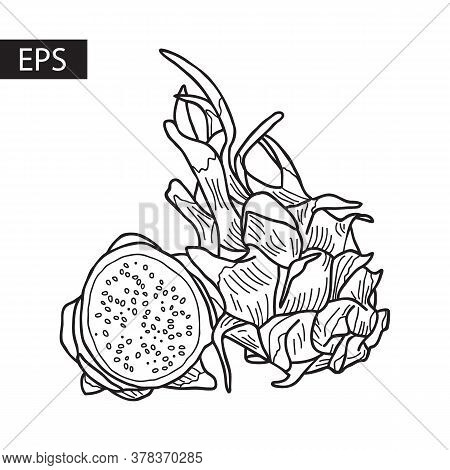 Whole And Half Of The Pitahaya Fruit. Hand-drawn Vector Illustration.