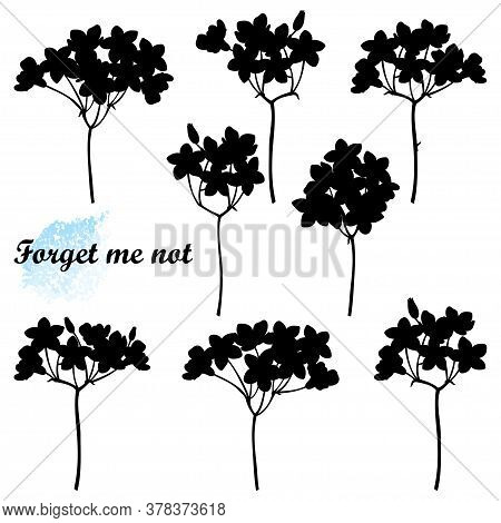 Vector Set With Forget Me Not Or Myosotis Flower Bunch Silhouettes, Bud And Stem In Black Isolated O