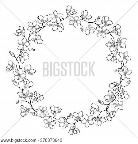Vector Round Wreath With Outline Forget Me Not Or Myosotis Flower Bunch, Stem And Bud In Black Isola