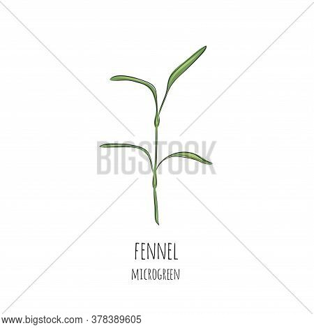 Hand Drawn Fennel Micro Greens. Vector Illustration In Sketch Style Isolated On White Background.