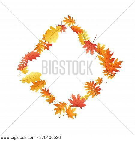 Oak, Maple, Wild Ash Rowan Leaves Vector, Autumn Foliage On White Background. Red Orange Gold Ash An