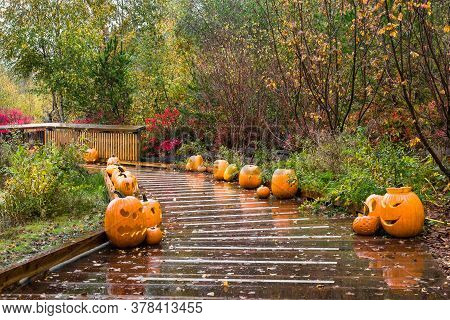 View At A Row Of Halloween Pumpkins Along A Wooden Trail On A Rainy Autumn Day In The Nature Park In