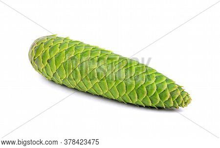 Green Pine Cone Isolated On A White Background. Spruce Cone.