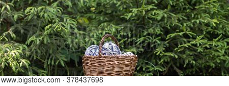 White-blue Fluffy Woolen Balls In A Basket On A Background Of Green Branches Of Spruce. Horizontal B