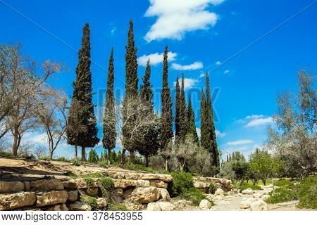 Cypress Alleys. Small, scenic desert park around the Ben Gurion Memorial. Steep rock on a natural plateau. View of the picturesque landscapes in the valleys of the Qing and Ramat Avdat.