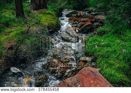 Beautiful Mountain Creek With Many Stones Among Rich Flora In Dark Forest. Atmospheric Landscape Wit